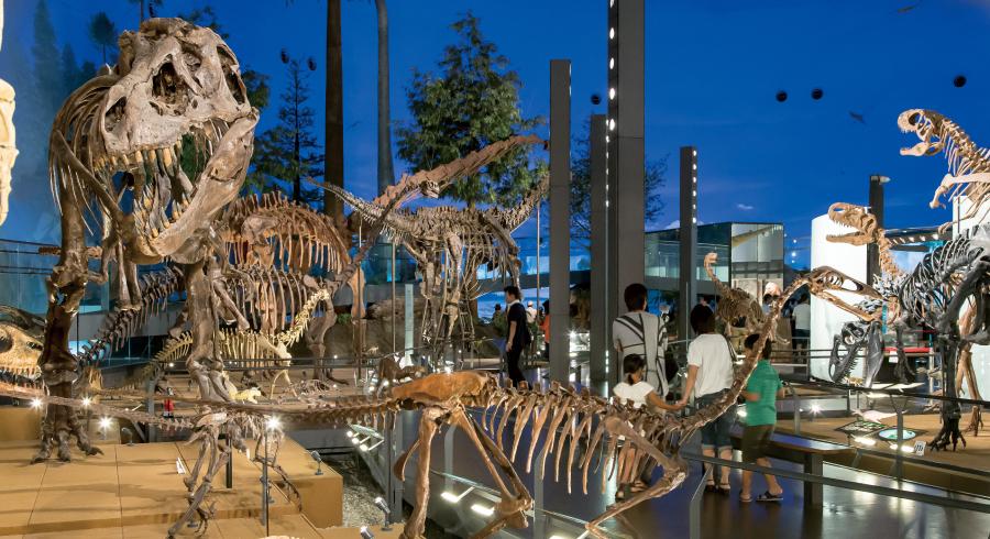 写真 福井県立恐竜博物館