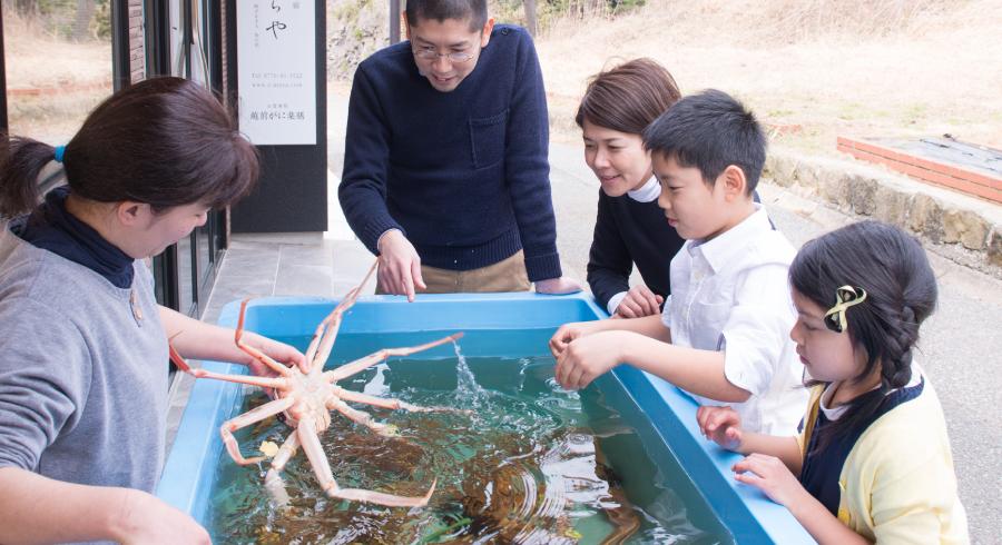 越前蟹の食事処「越前がに楽膳」の水槽